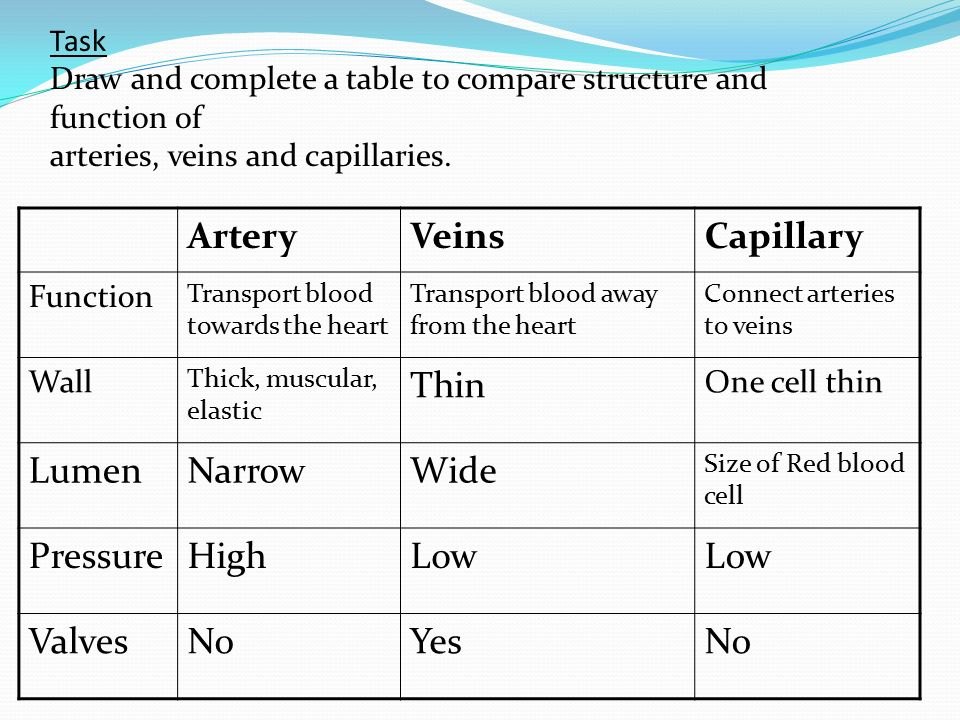 Blood Vessels Learning Objectives Compare And Understand The