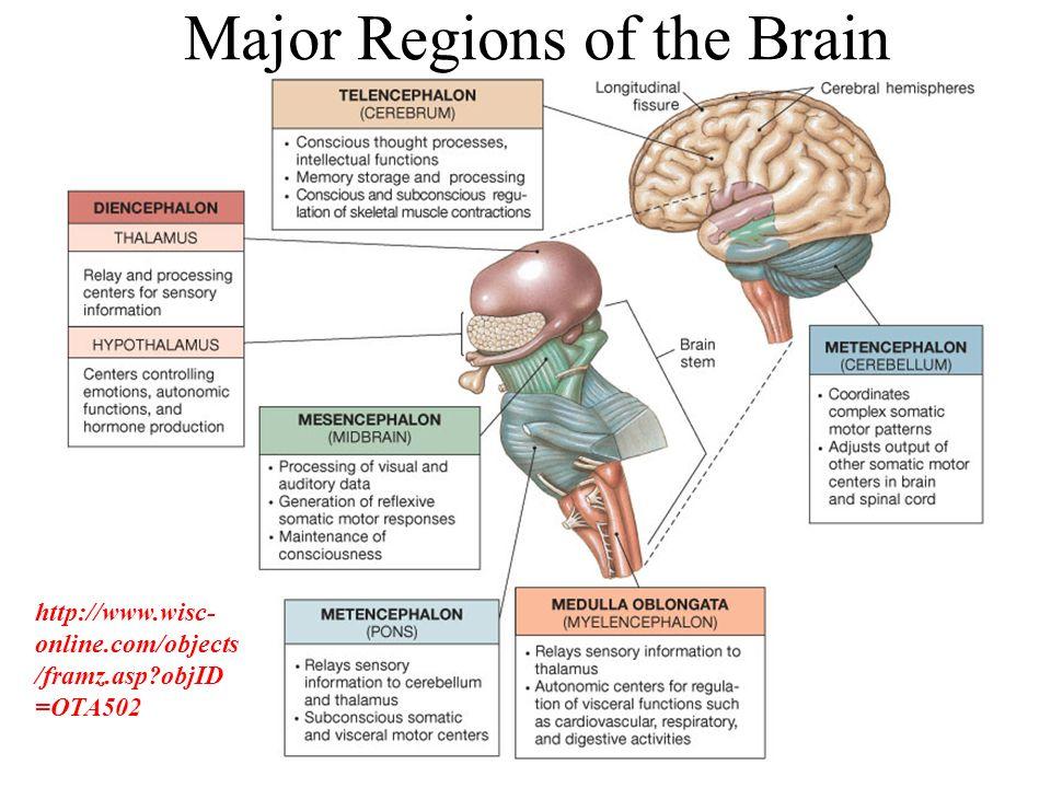 THE NERVOUS SYSTEM: NEURAL TISSUE C H A P T E R T H I R T E E N ...