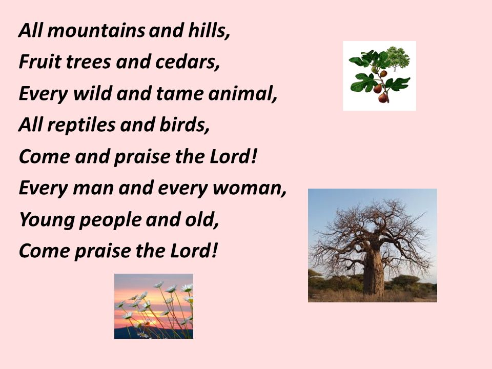 All mountains and hills, Fruit trees and cedars, Every wild and tame animal, All reptiles and birds, Come and praise the Lord.