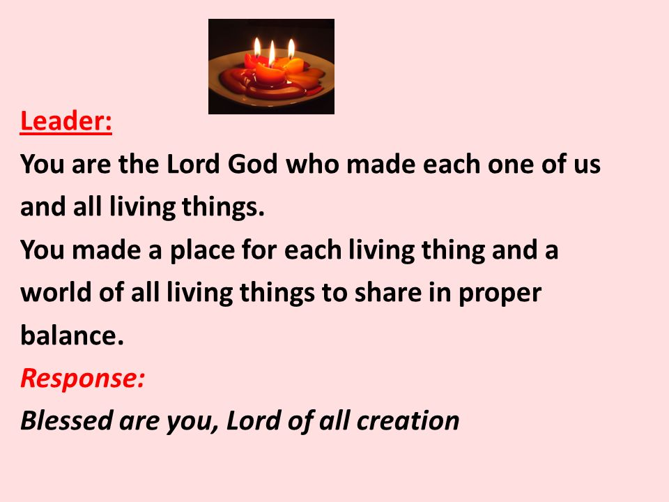 Leader: You are the Lord God who made each one of us and all living things.