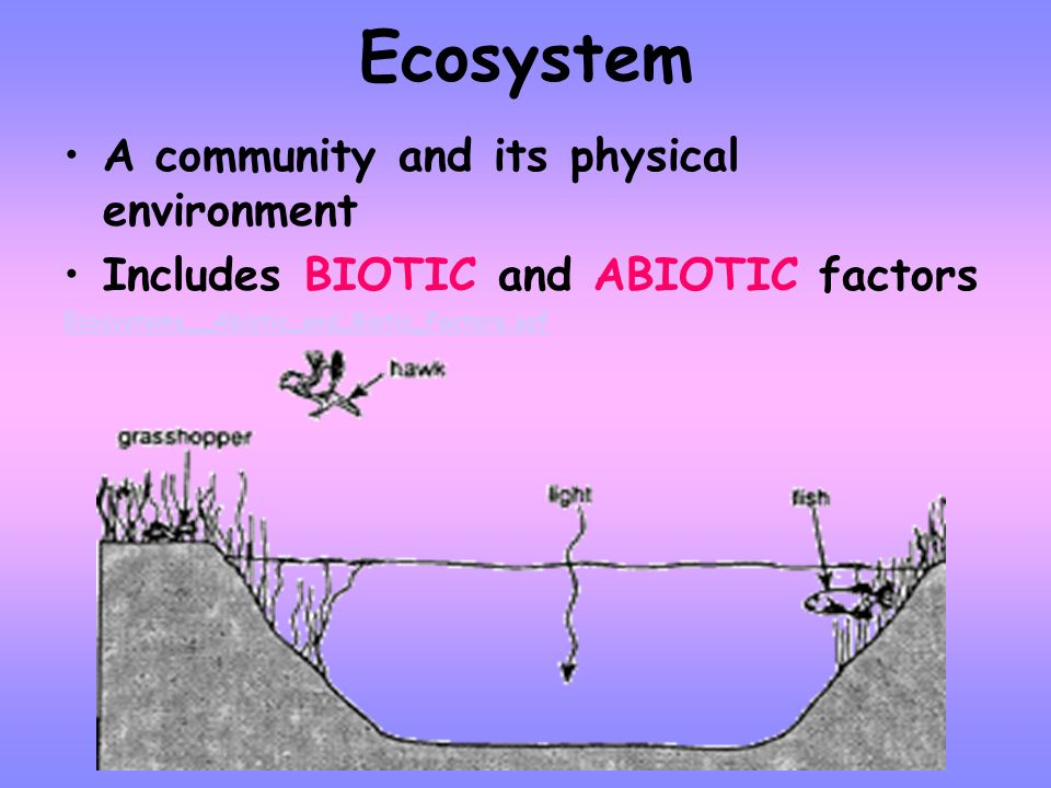 Community ALL THE POPULATIONS of different organisms within a given area Example: all the frogs, fish, algae, and plants in and around a pond