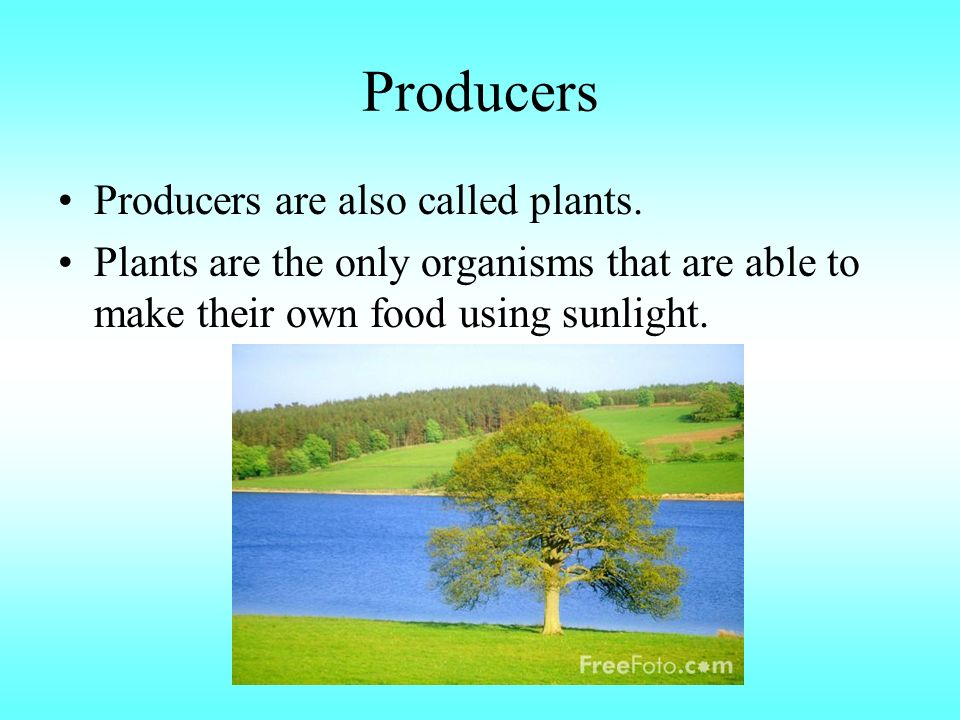 Producers Producers are also called plants.