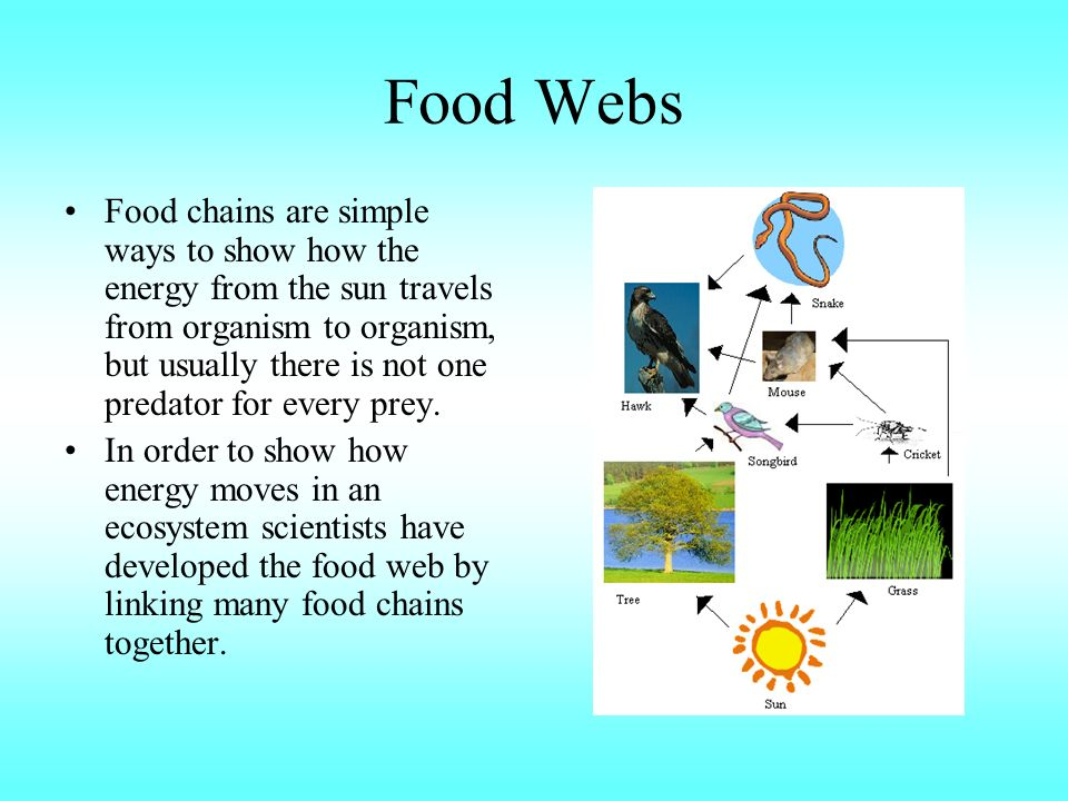 Food Webs Food chains are simple ways to show how the energy from the sun travels from organism to organism, but usually there is not one predator for every prey.