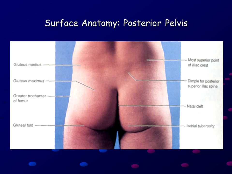 Ling Shucai Regional anatomy of lower limb Posterior region of lower ...