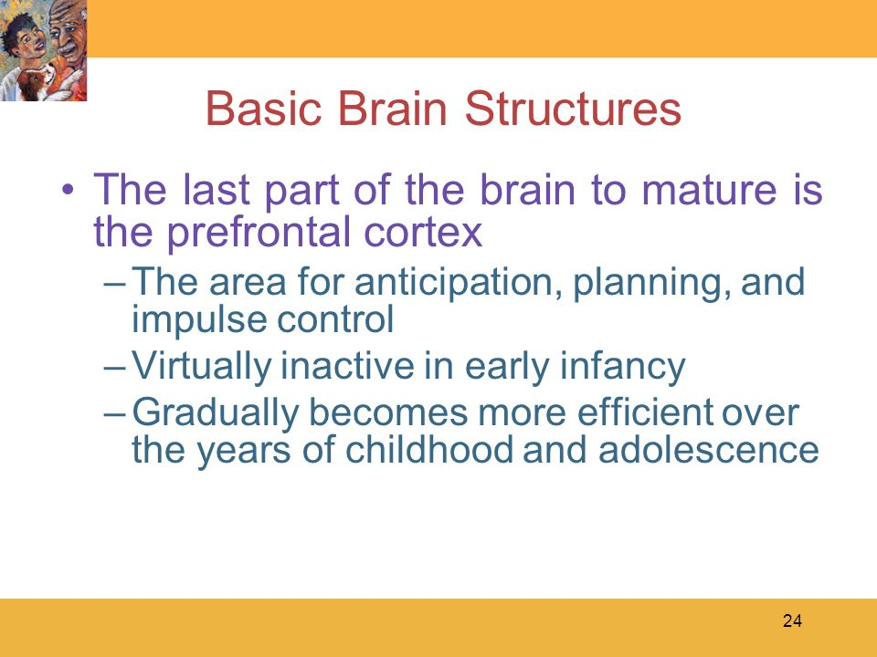 Last part of the brain to mature
