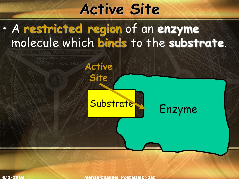 Active Site restricted region enzyme bindssubstrateA restricted region of an enzyme molecule which binds to the substrate.