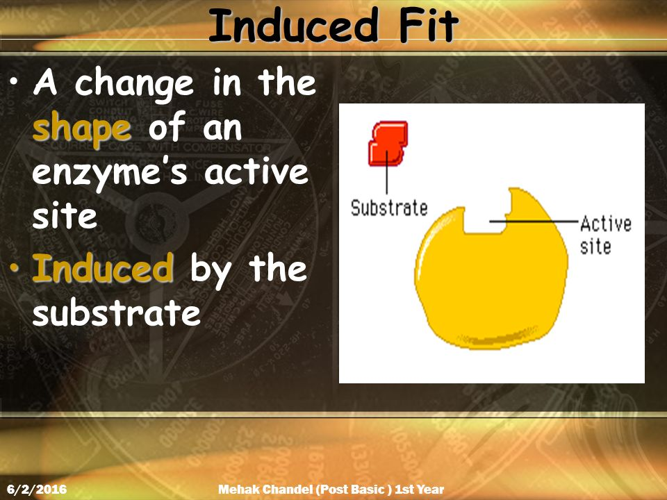 Induced Fit shapeA change in the shape of an enzyme's active site InducedInduced by the substrate Mehak Chandel (Post Basic ) 1st Year6/2/2016