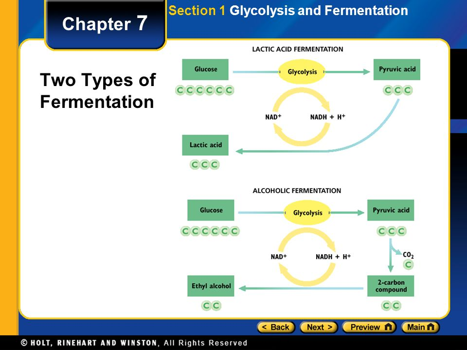 Chapter 7 Two Types of Fermentation Section 1 Glycolysis and Fermentation