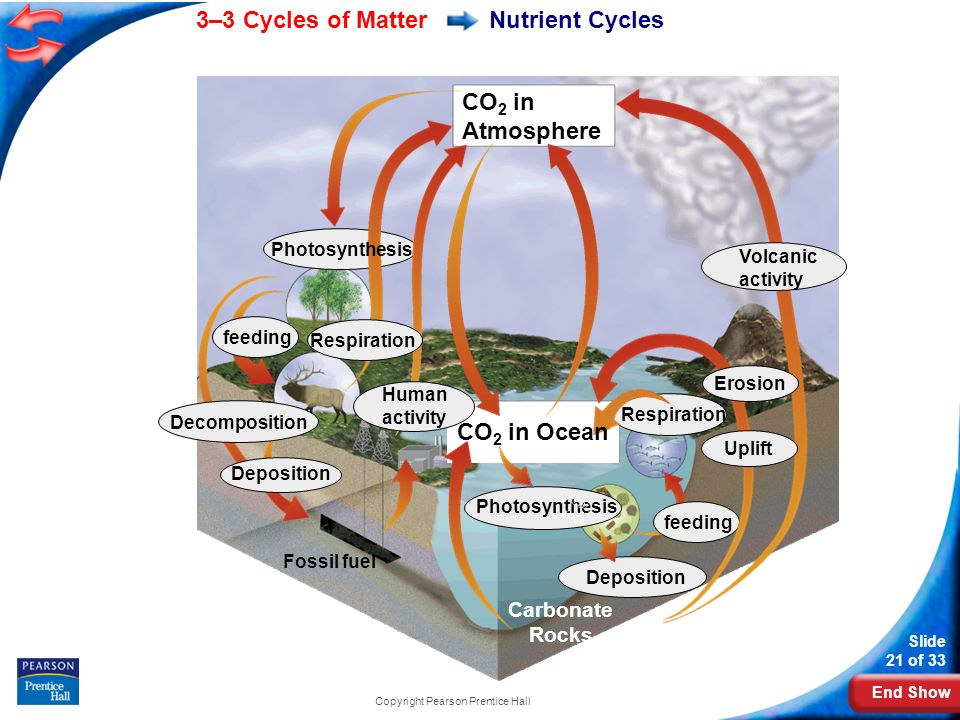 End Show 3–3 Cycles of Matter Slide 21 of 33 Copyright Pearson Prentice Hall Nutrient Cycles CO 2 in Atmosphere Photosynthesis feeding Respiration Deposition Carbonate Rocks Deposition Decomposition Fossil fuel Volcanic activity Uplift Erosion Respiration Human activity CO 2 in Ocean Photosynthesis