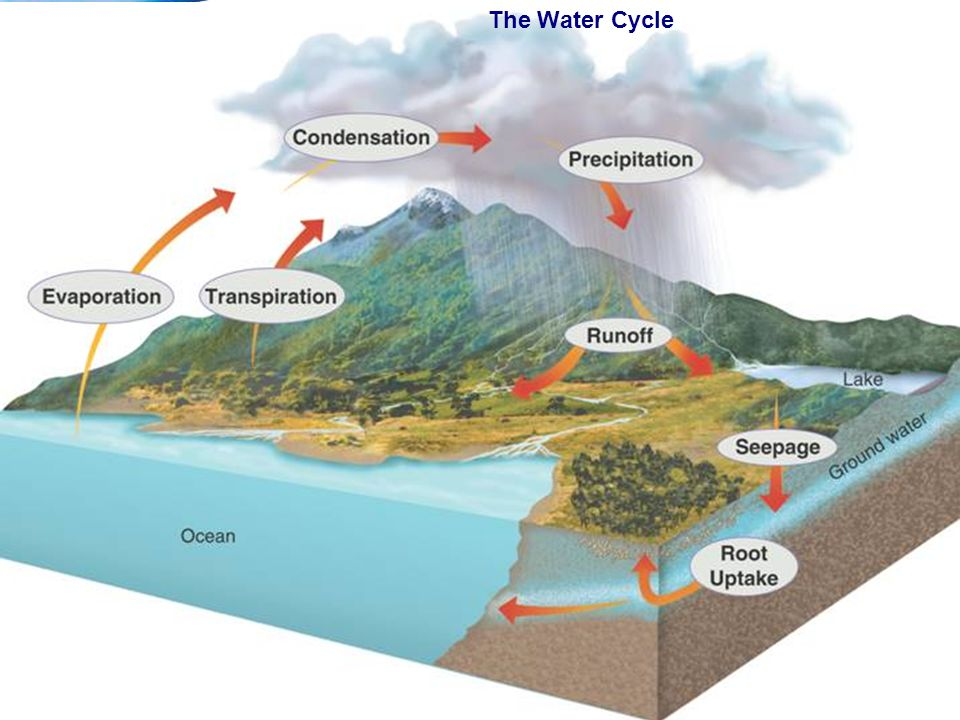 End Show 3–3 Cycles of Matter Slide 7 of 33 Copyright Pearson Prentice Hall The Water Cycle