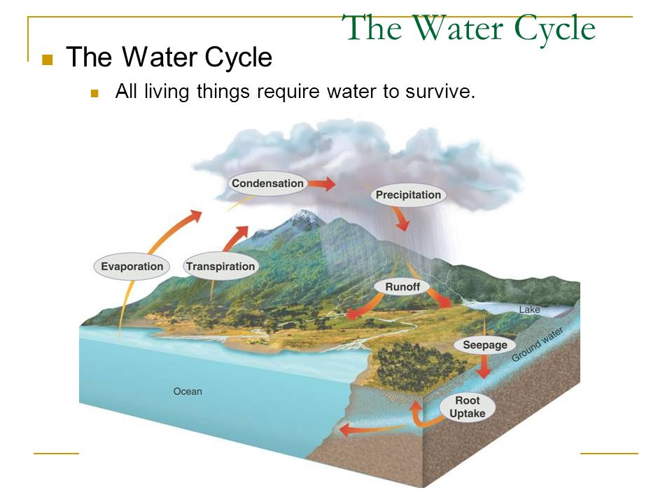 The Water Cycle All living things require water to survive. The Water Cycle