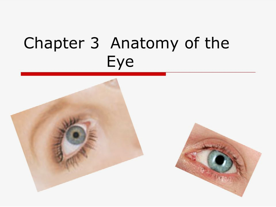 Chapter 3 Anatomy of the Eye. Sclera  The white part of the ...