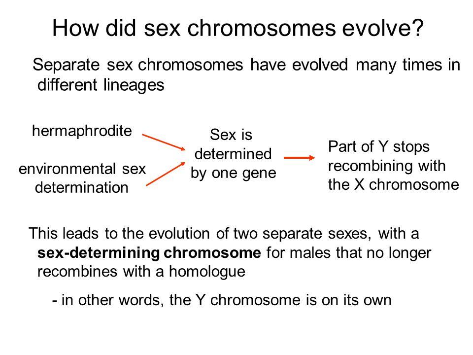 Sex determination hostile environment sperm