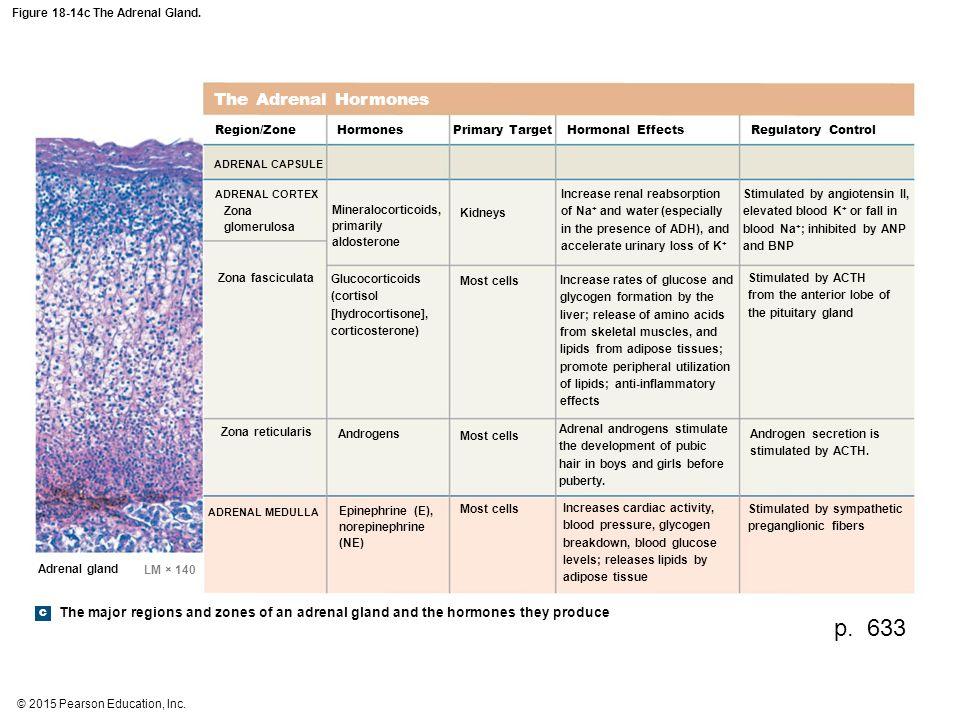 2015 Pearson Education Inc Figure 18 14a The Adrenal Gland A