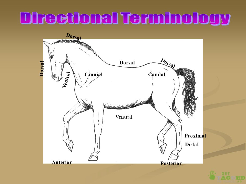 Animal Anatomy & Physiology An Introduction. Define Anatomy ...
