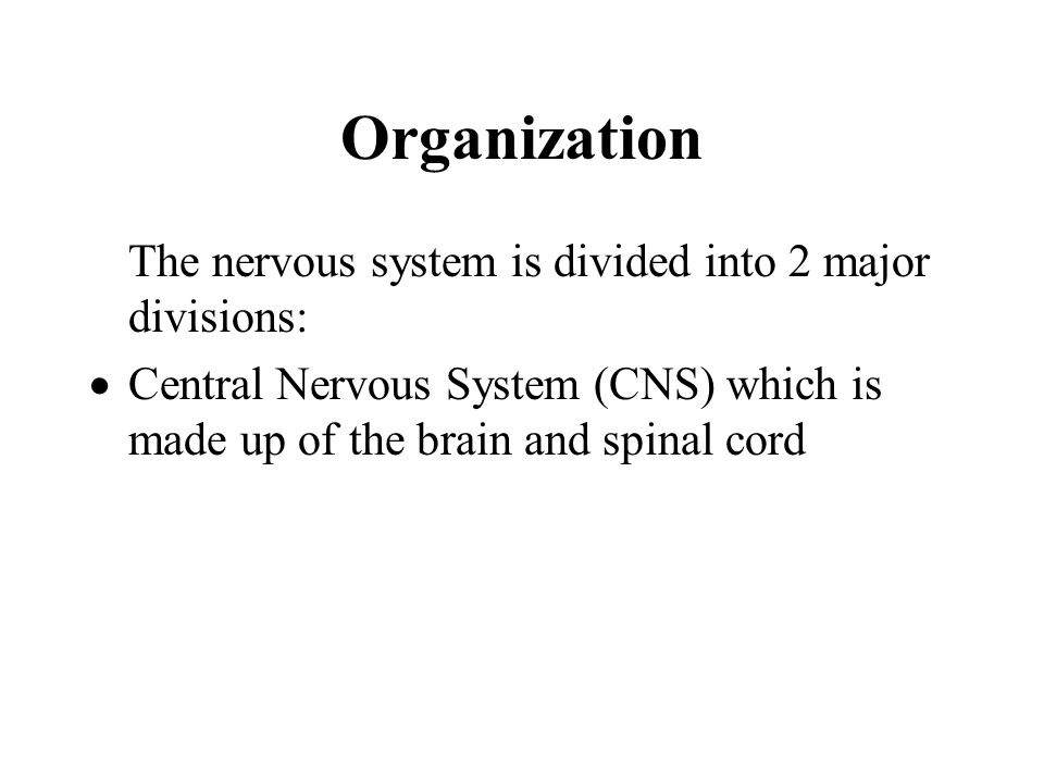The Nervous System And Tissue Organization The Nervous System Has 3