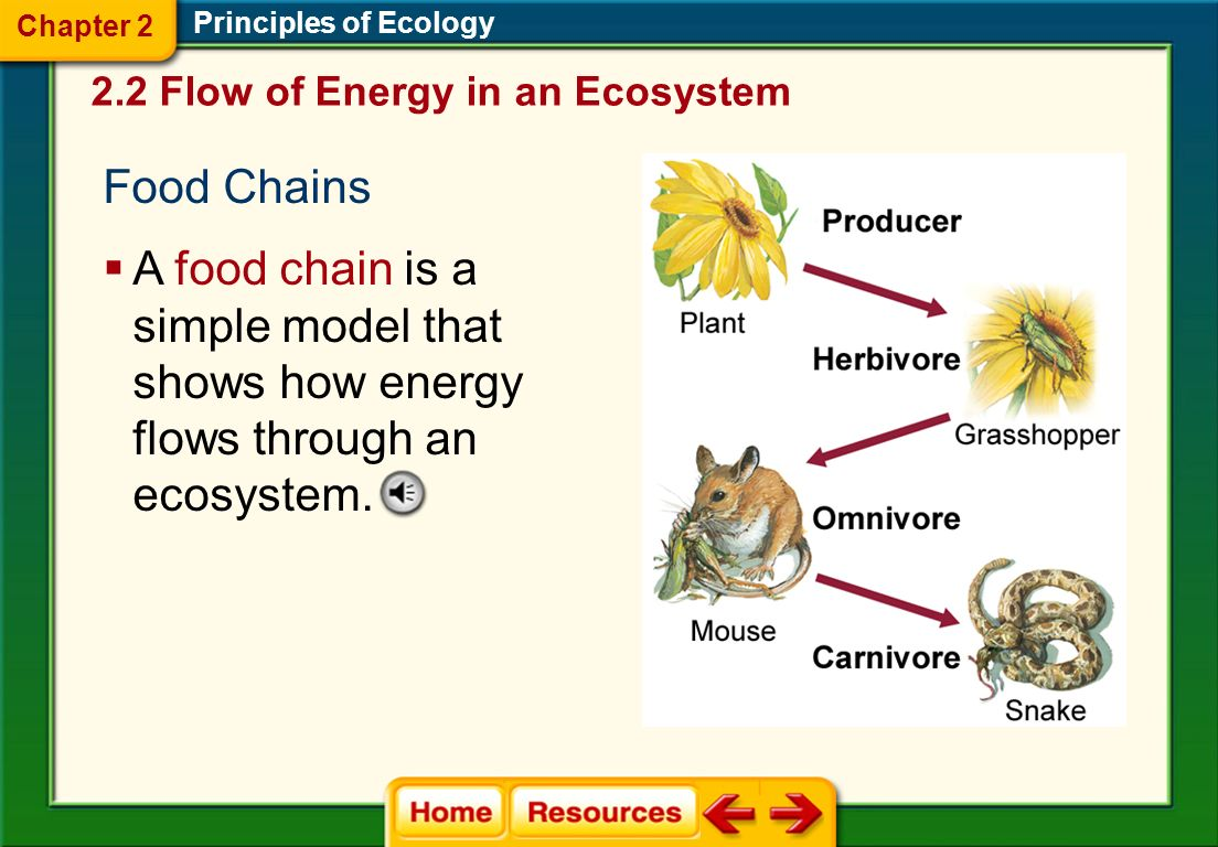 Principles of Ecology Models of Energy Flow  Food chains and food webs model the energy flow through an ecosystem.