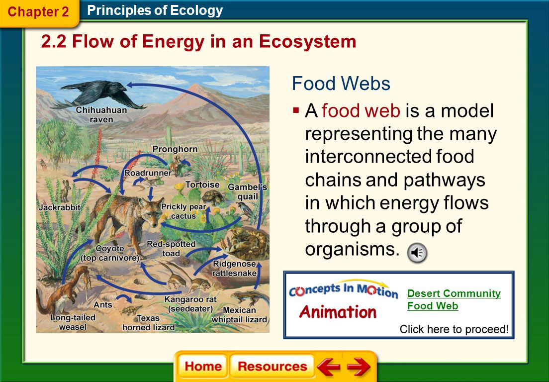 Principles of Ecology Food Chains  A food chain is a simple model that shows how energy flows through an ecosystem.
