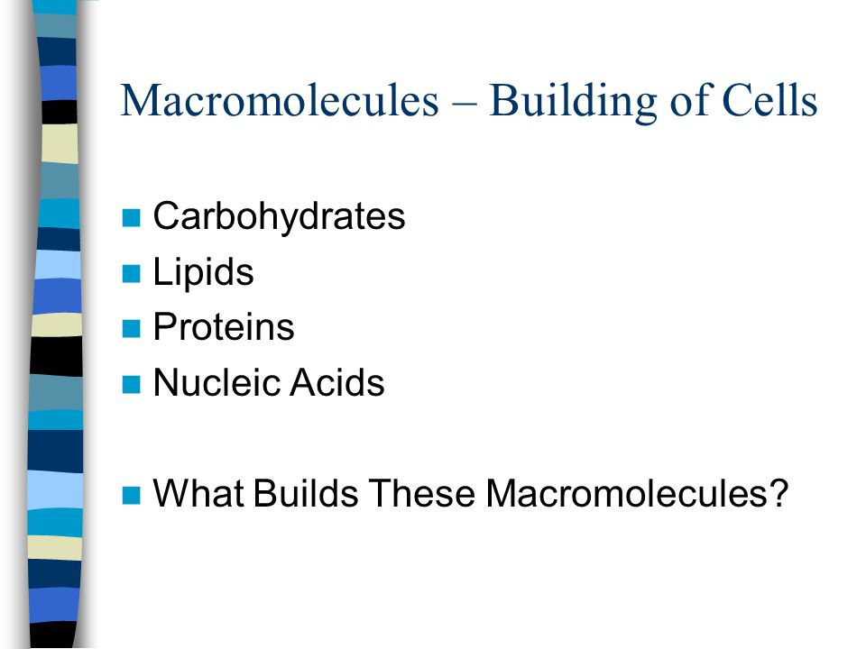 Organic Compounds What Builds This Object Macromolecules