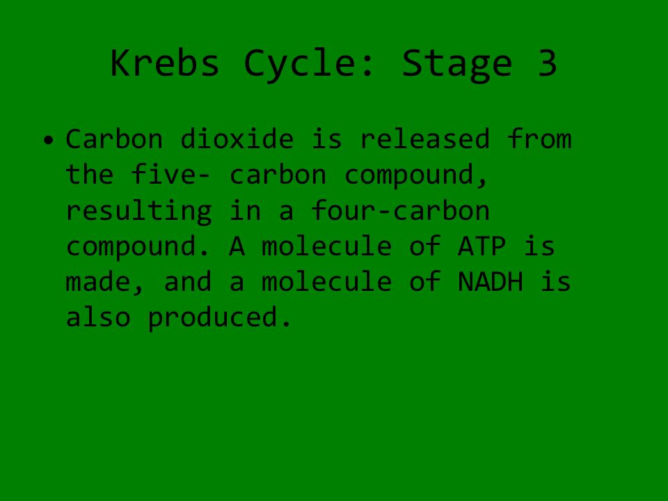 Krebs Cycle: Stage 3 Carbon dioxide is released from the five- carbon compound, resulting in a four-carbon compound.
