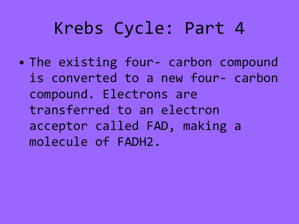 Krebs Cycle: Part 4 The existing four- carbon compound is converted to a new four- carbon compound.