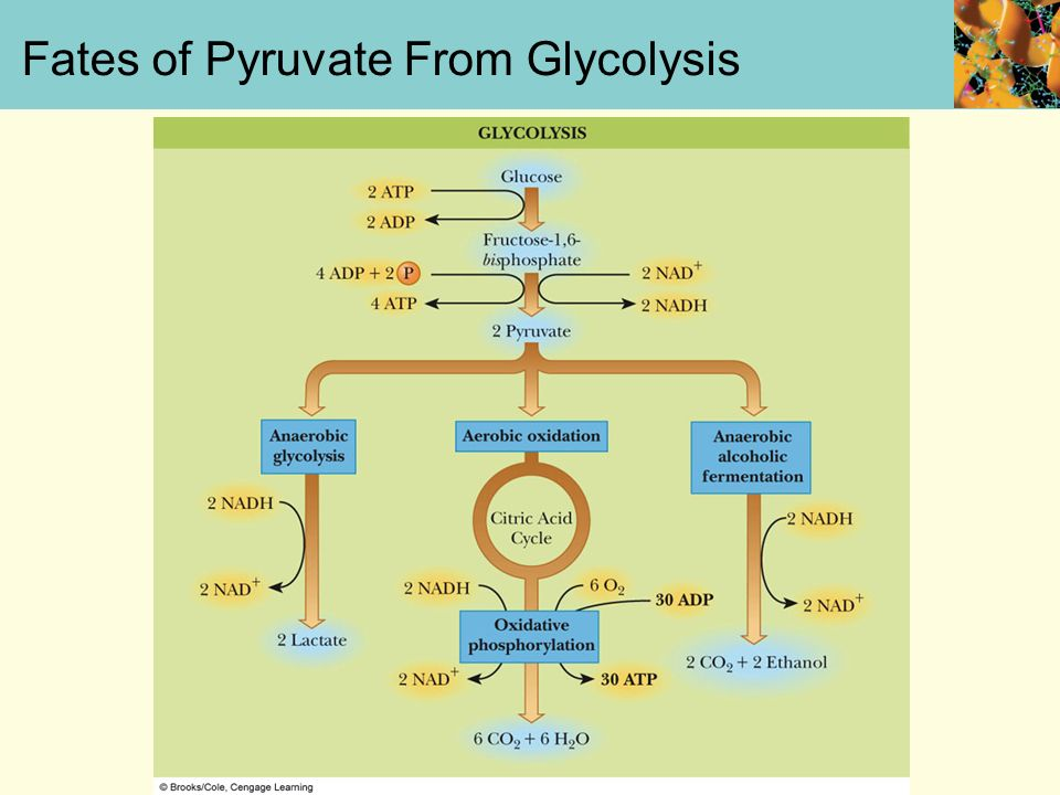 Chapter 17 Glycolysis Mary K Campbell Shawn O Farrell Paul D Adams University Of Arkansas Ppt Download