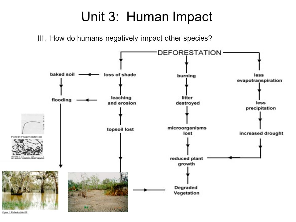 main cause environmental degradation size human population One of the earliest attempts to describe the role of multiple factors in determining environmental degradation was the ipat equation 1 it describes the multiplicative contribution of population (p), affluence (a) and technology (t) to environmental impact (i.
