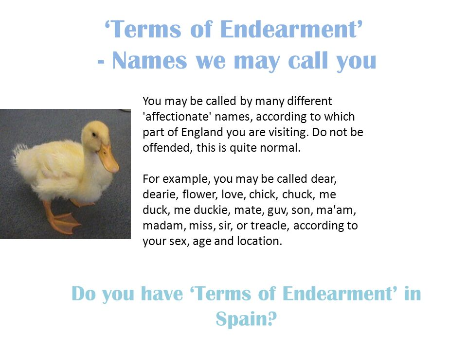 british terms of endearment list