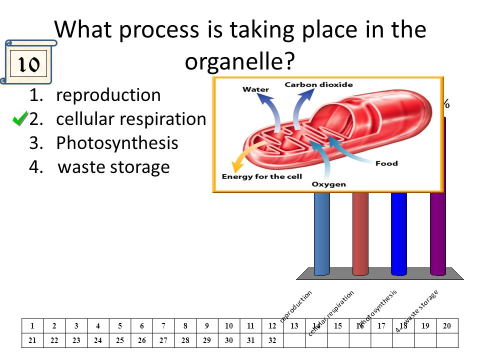 Cellsreview the line in the diagram is pointing to the part of the what process is taking place in the organelle ccuart Gallery