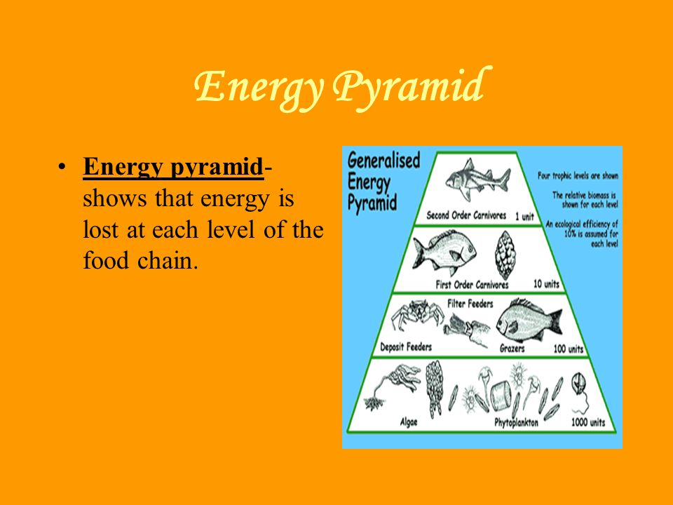 Energy Pyramid Energy pyramid- shows that energy is lost at each level of the food chain.