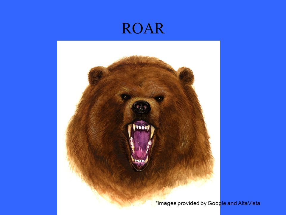 ROAR *Images provided by Google and AltaVista