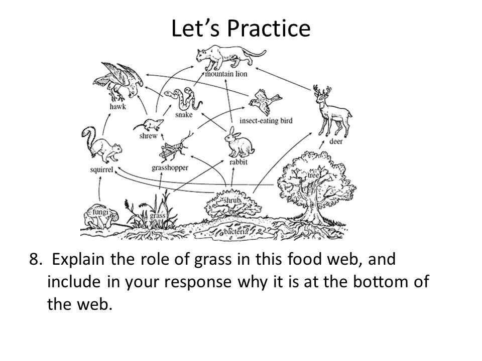 Producer Food Web Diagram Custom Wiring Diagram