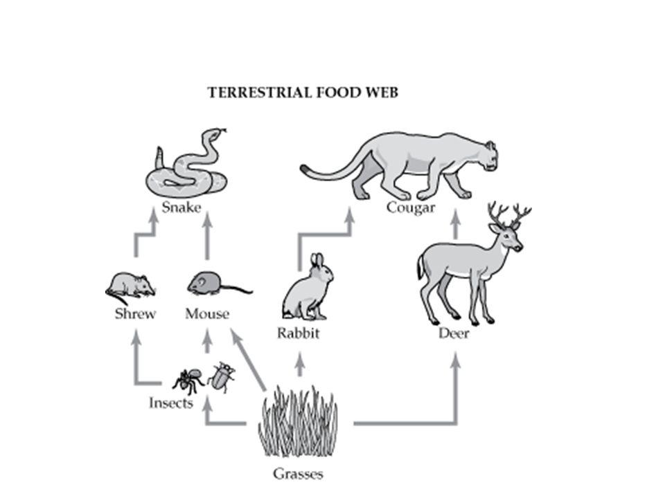 Organisms Food Chain Diagram Trusted Wiring Diagram