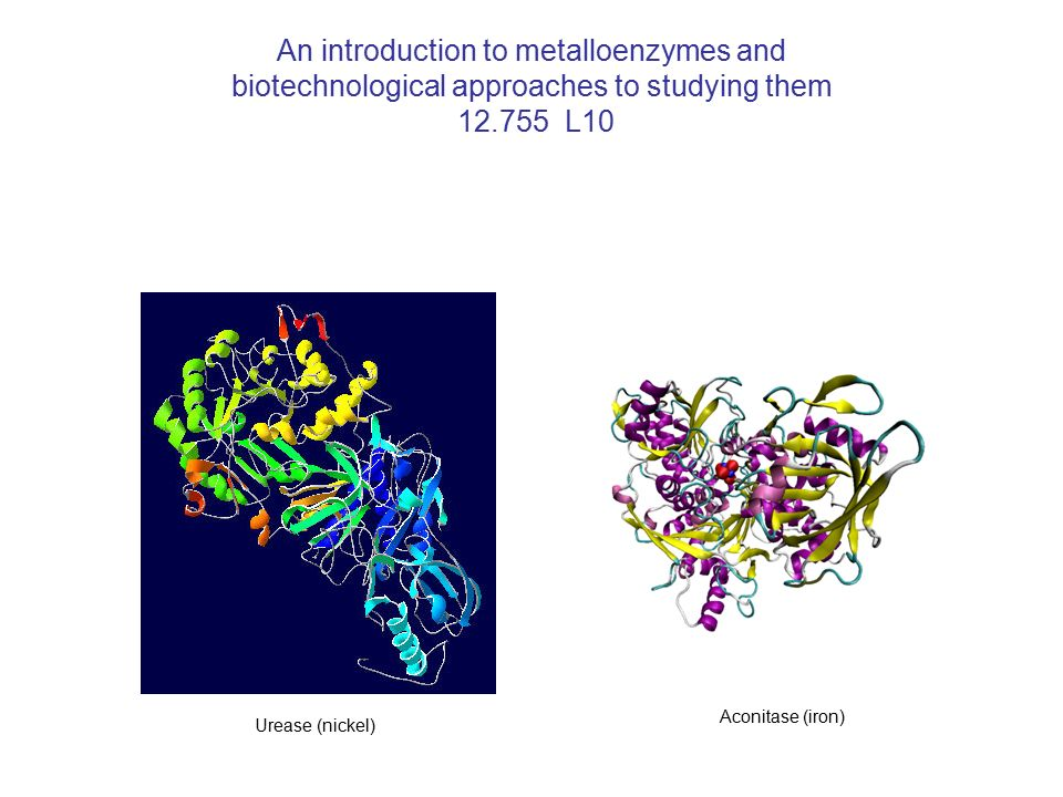 An introduction to metalloenzymes and biotechnological approaches to studying them 12.755 L10 Urease (nickel) Aconitase (iron)