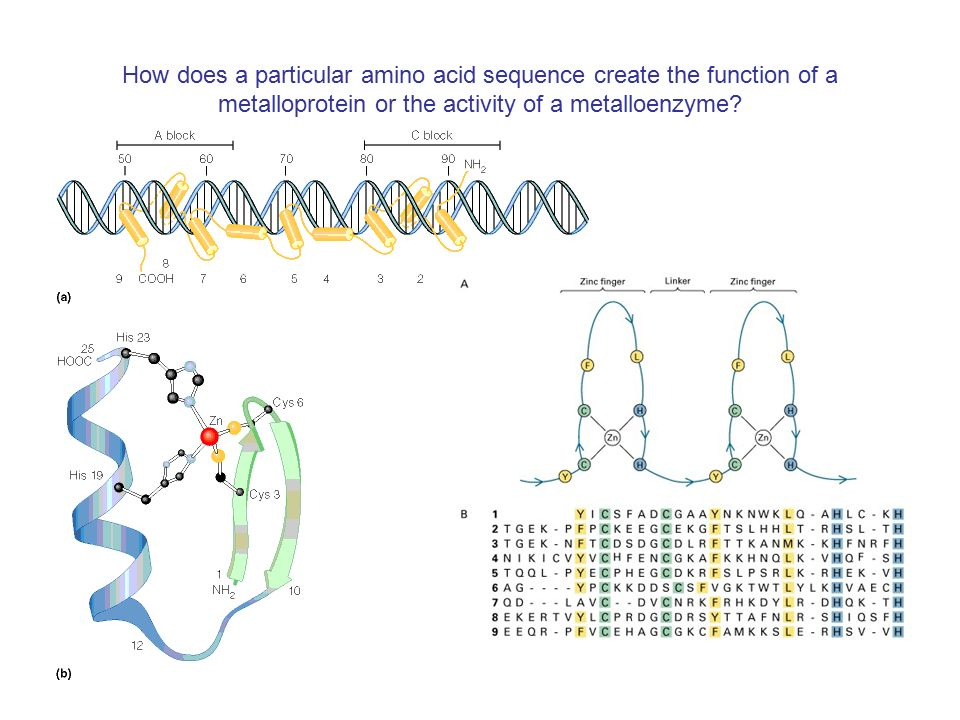 How does a particular amino acid sequence create the function of a metalloprotein or the activity of a metalloenzyme