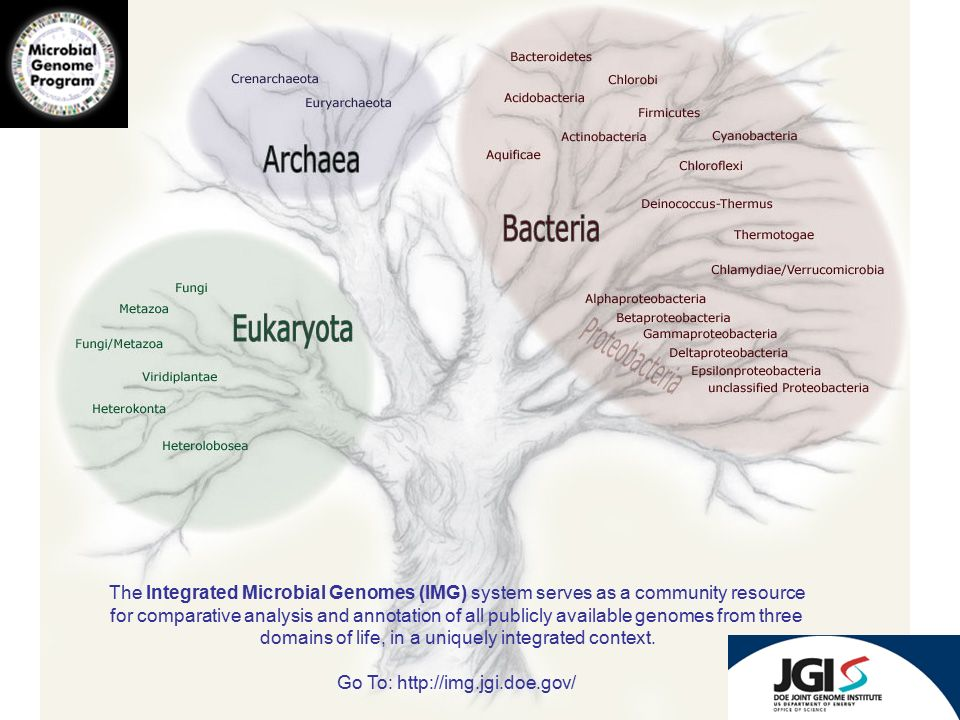 The Integrated Microbial Genomes (IMG) system serves as a community resource for comparative analysis and annotation of all publicly available genomes from three domains of life, in a uniquely integrated context.