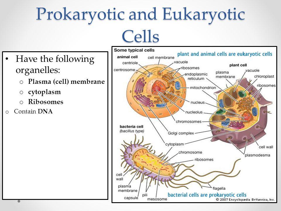 Keystone Test Preparation Prokaryotic Vs Eukaryotic Cells