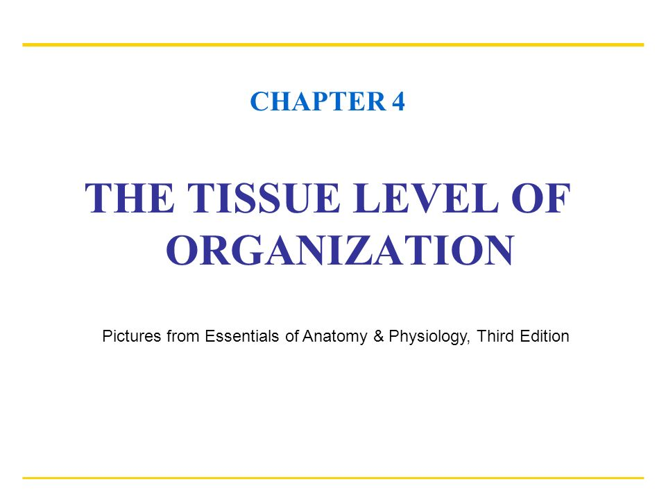 CHAPTER 4 THE TISSUE LEVEL OF ORGANIZATION Pictures from Essentials ...
