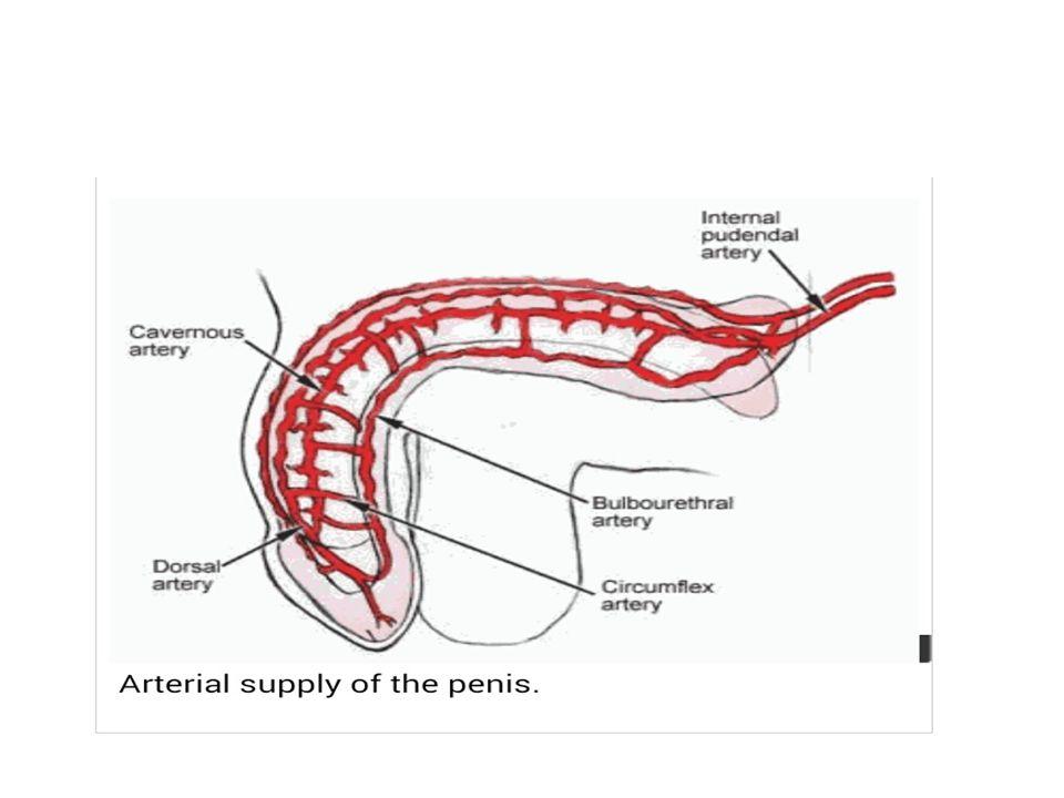 Department of urology Dr. Matalu Hamis Dr. Mocha George - ppt video ...