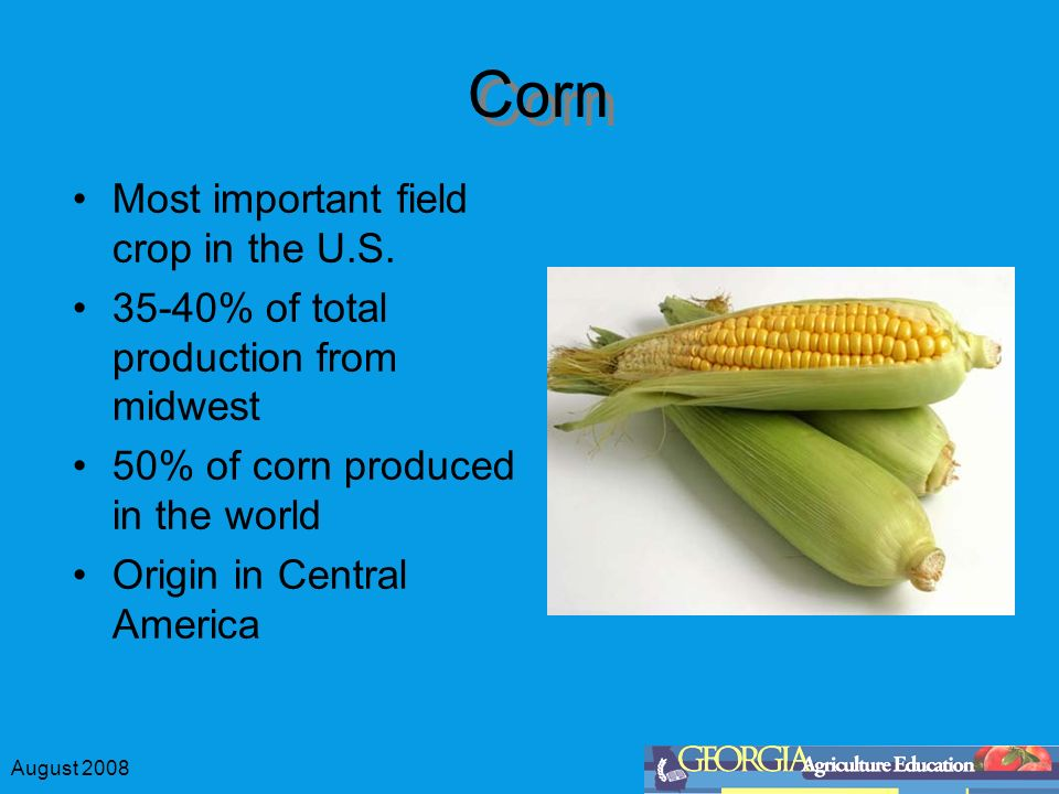 August 2008 Corn Most Important Field Crop In The US