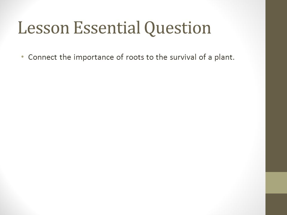 Plant Anatomy & Physiology Root Anatomy. Warm-up Grab a plant and ...