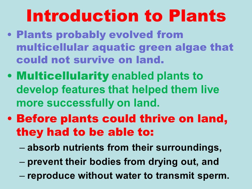 UNIT 12 PLANT ANATOMY. Introduction to Plants Plants probably ...