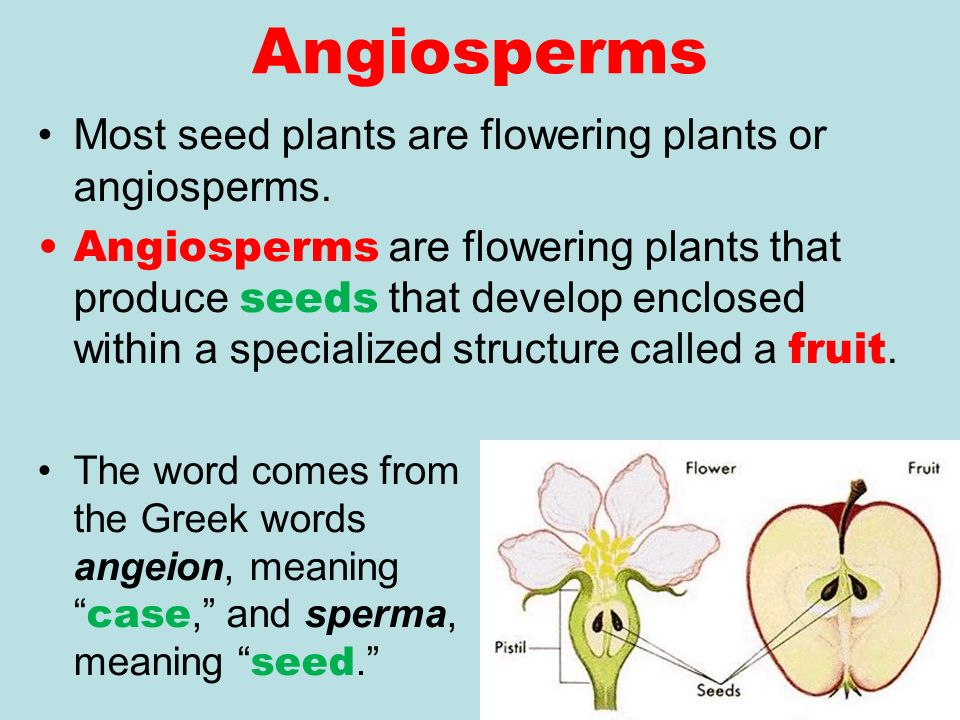 UNIT 12 PLANT ANATOMY. Introduction to Plants Plants probably ...