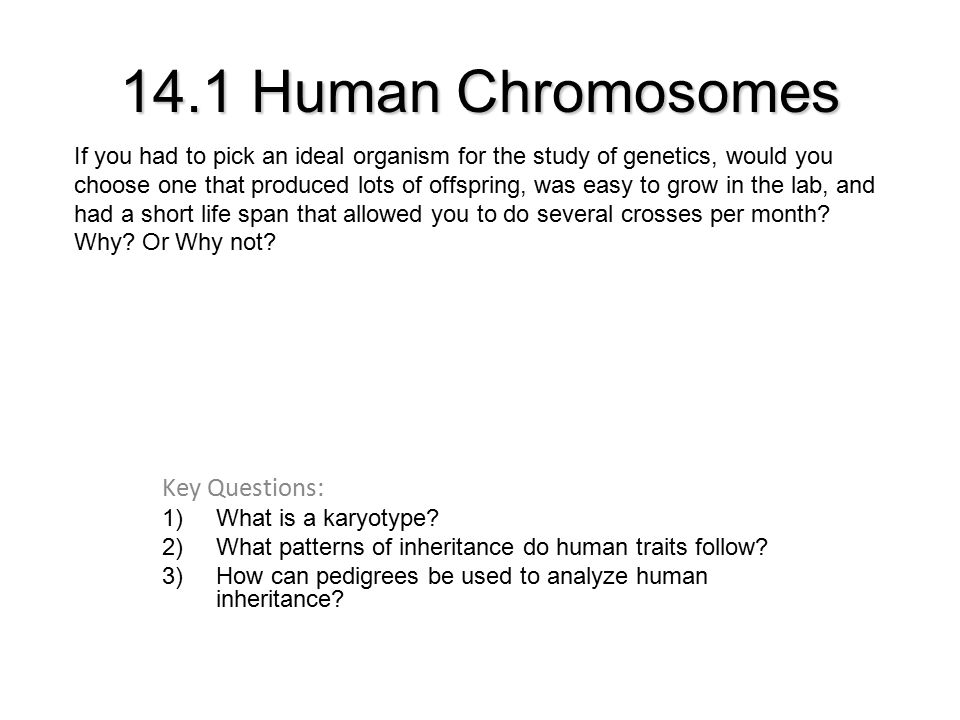 14 1 Human Chromosomes Key Questions 1 What Is A Karyotype