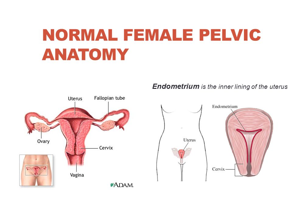 Nur 210 Pathophysiology Female Reproductive Problems Wanda Lovitz