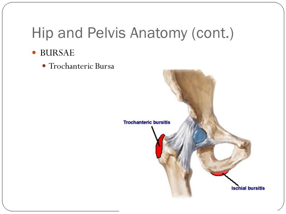 Auburn High School Sports Medicine Source: Hoppenfeld, Chapter 6 Hip ...