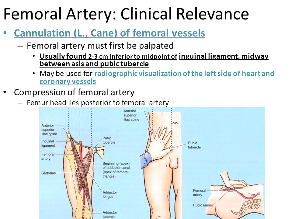 Great Saphenous Vein: Clinical Relevance Can be used: – To ...