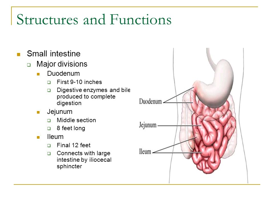 Digestion System Main Functions Digestion Process Of Changing