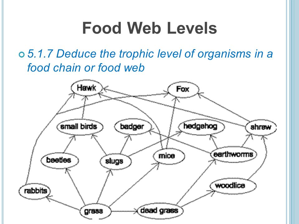 trophic level is its position in a food chain 14 food
