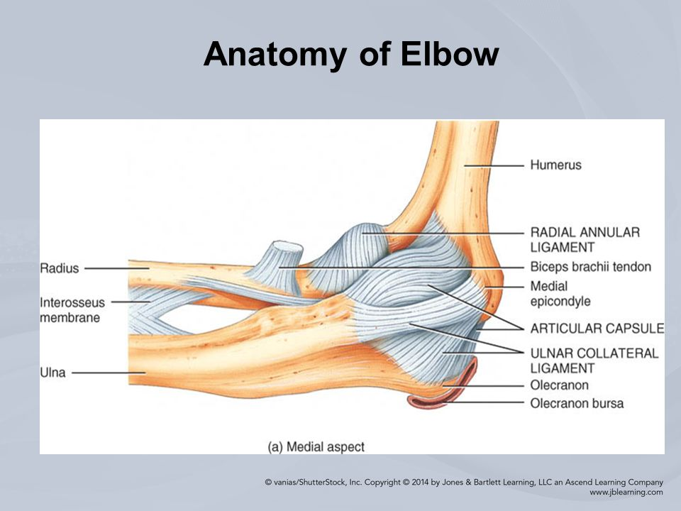 Chapter 12 Injuries to the Arm, Wrist, and Hand. Anatomy of Elbow ...